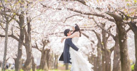 トップ桜ドレス_edited-1