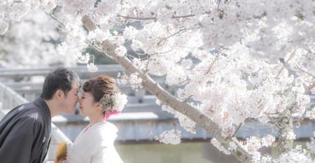 桜ヘッド2016-2_edited-1
